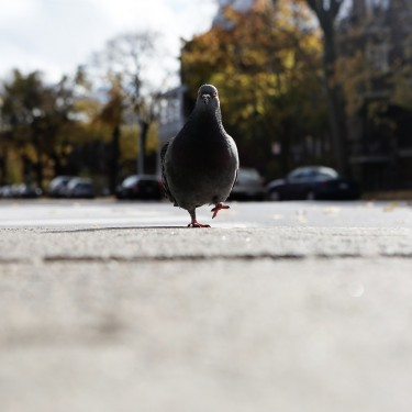 pigeon_algorithm